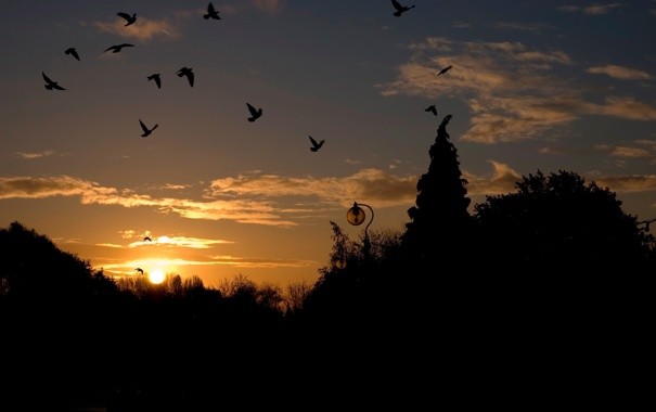 Фото обои небо, деревья, закат, птицы, фонари, силуэты, оьлака