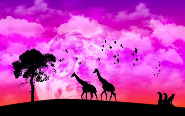 Фото обои природа, жираф, африка