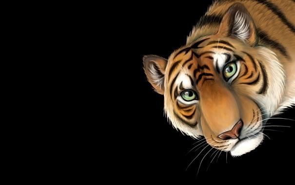 Фото обои морда, тигр, минимализм, голова, tiger, усатый