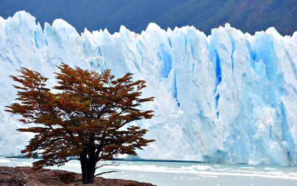 Фото обои природа, дерево, лёд