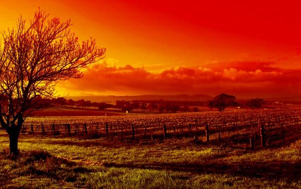 Фото обои пейзаж, природа, фото, краса