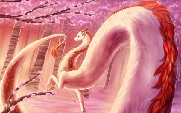 Фото обои дракон, сакура, хвост, унесенные призраками, haku