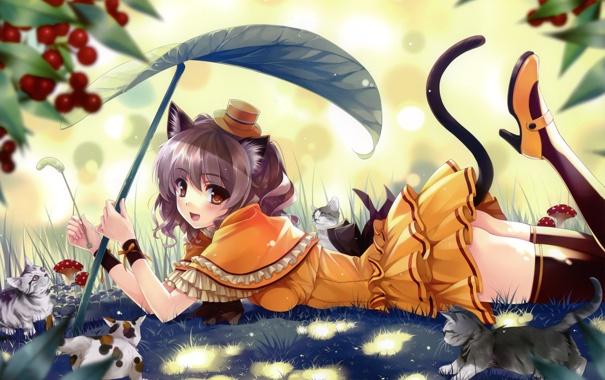 Фото обои лес, кот, лист, грибы, чулки, шляпа, девочка