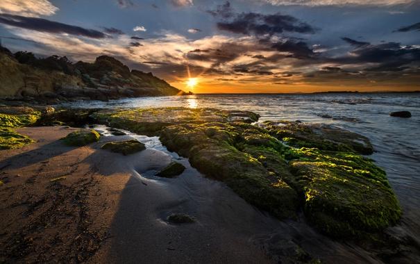 Фото обои море, небо, облака, водоросли, закат, камни, скалы