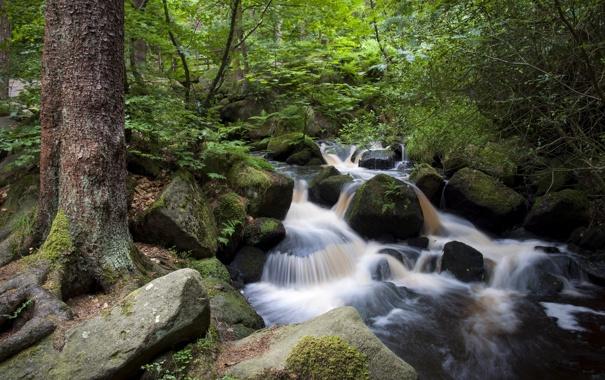 Фото обои лес, ручей, камни, Англия, England, Sheffield, Шеффилд