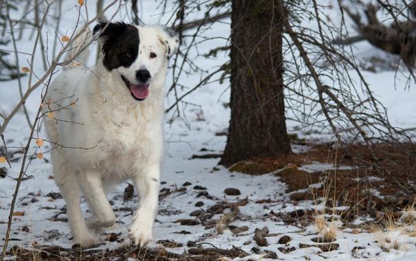 Фото обои лес, друг, собака