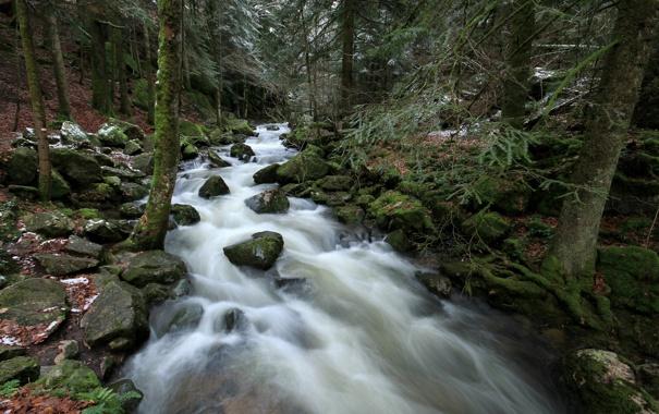 Фото обои лес, камни, река