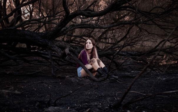 Фото обои лес, девушка, шорты, ножки