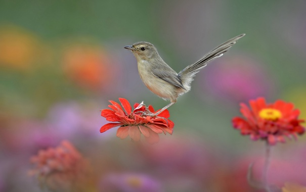 Фото обои цветок, природа, птица, хвост