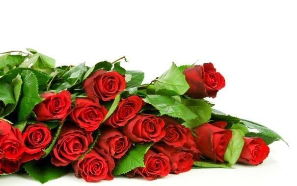 Фото обои фото, Цветы, Красный, Розы, Много