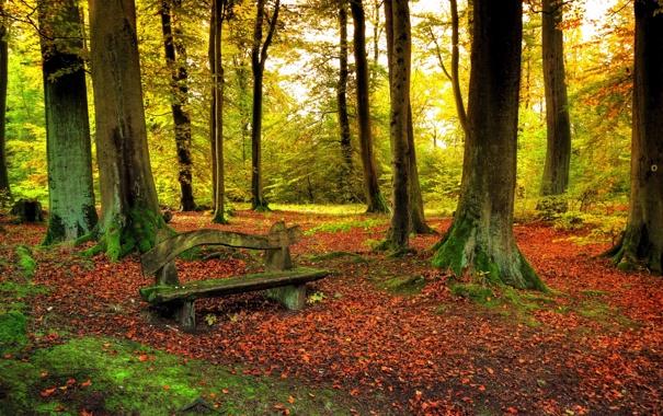 Фото обои листья, леса, природы, скамья, деревья, Осенью