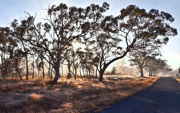 Фото обои дорога, свет, деревья, пейзаж