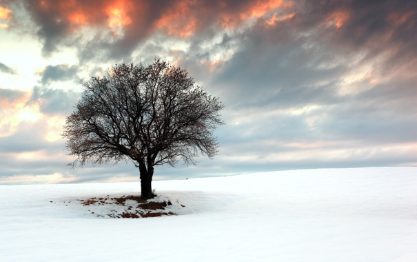 Фото обои пейзаж, поле, снег, дерево