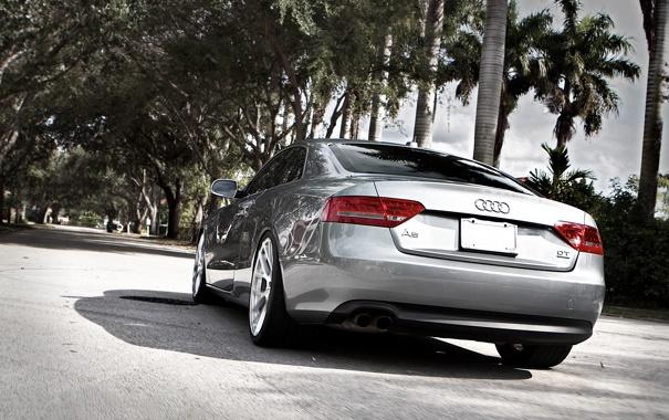 Фото обои пальмы, Audi, ауди, улица, серебристый, silvery