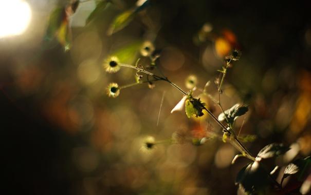 Фото обои макро, природа, фото, фон, обои, цвет, растения