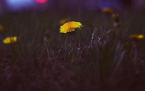 Фото обои зелень, трава, цвета, закат, город, одуванчик, улица