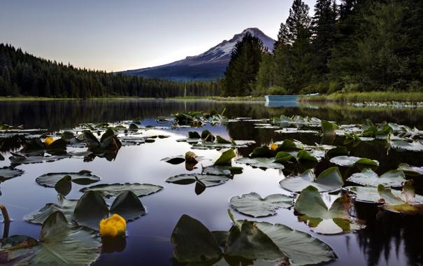 Фото обои природа, пейзаж, лилии, озеро, гора