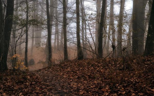 Фото обои осень, лес, природа