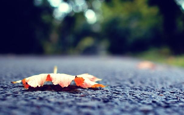 Фото обои осень, макро, сухой, листик, асфальт. дорога