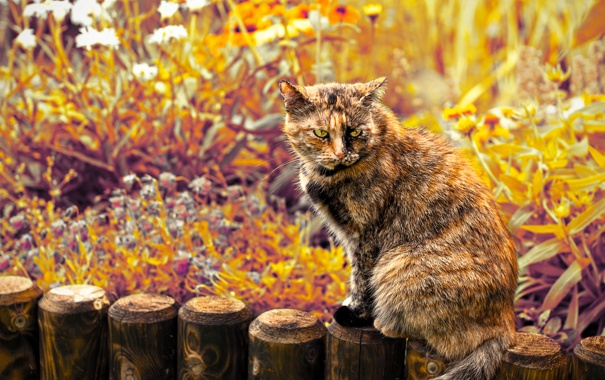 Фото обои кот, взгляд, цветы, злой