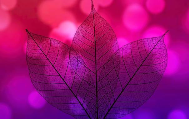 Фото обои прозрачность, природа, лист, цвет, силуэт
