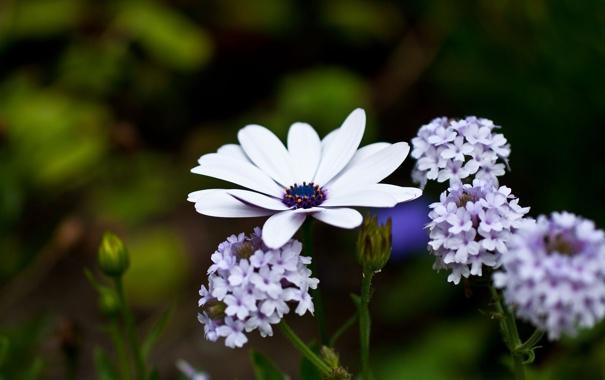 Фото обои цветок, макро, цветы, природа, цвет, растения, белые