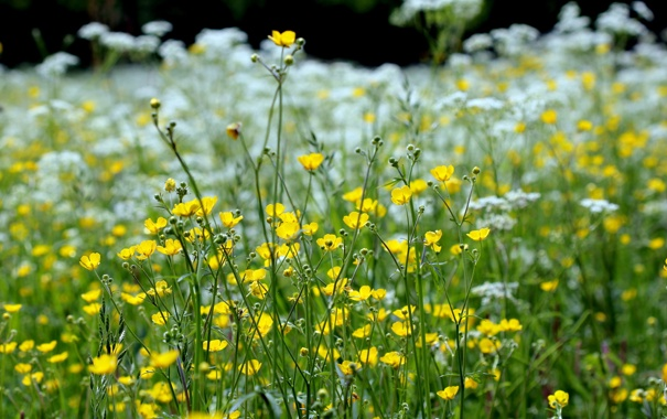Фото обои макро, природа, весна, травы