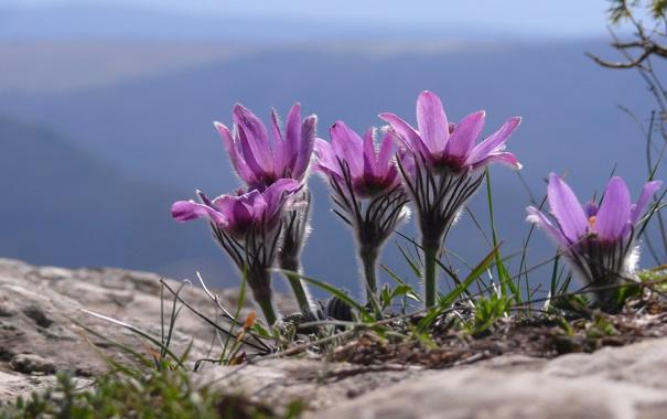 Фото обои цветы, природа, macro