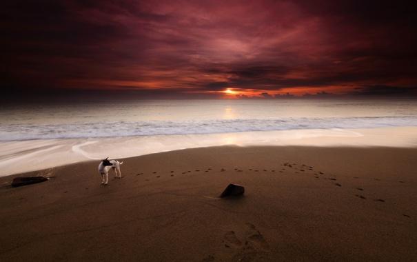 Фото обои море, пляж, закат, собака