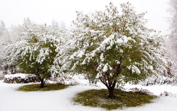 Фото обои зима, лес, снег, деревья, белоснежно, СКАЗАЧНО