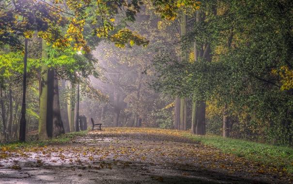 Фото обои город, парк, скамья