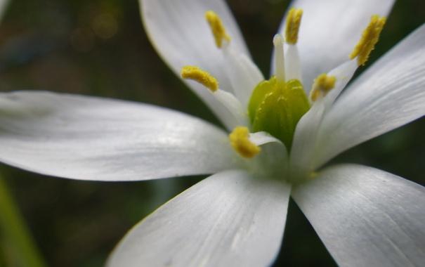 Фото обои белый, цветок, лепестки