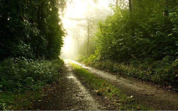 Фото обои дорога, свет, Лес, лучи света