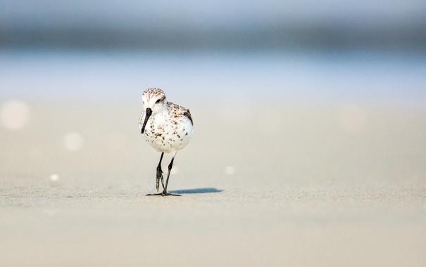 Фото обои песок, пляж, лето, солнце, птица, боке