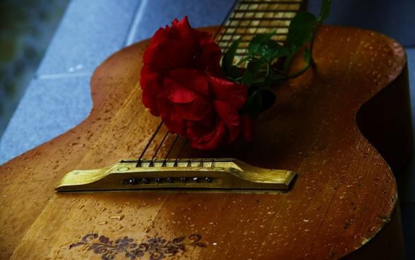 Фото обои капли, роза, гитара