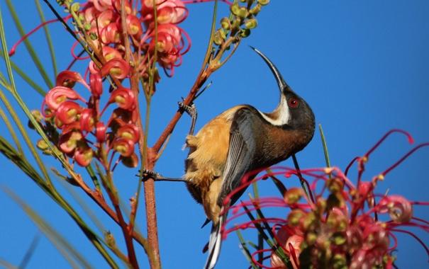 Фото обои цветок, небо, птица, растение, клюв