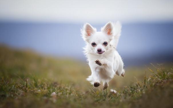 Фото обои фон, собака, бег