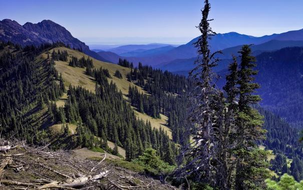 Фото обои лес, небо, горы, склон