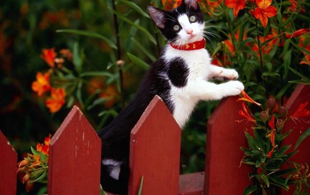 Фото обои цветы, котенок, забор, ошейник