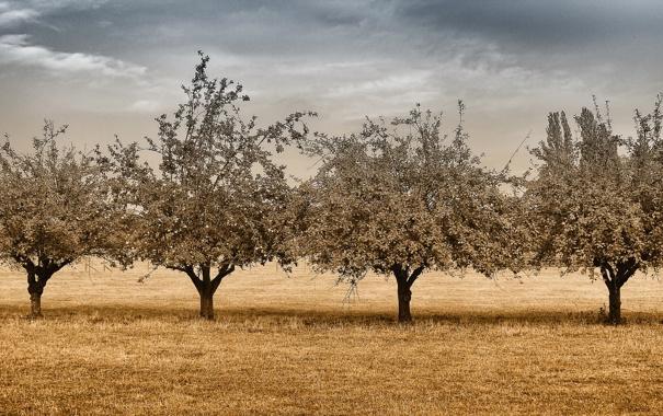Фото обои поле, деревья, пейзаж