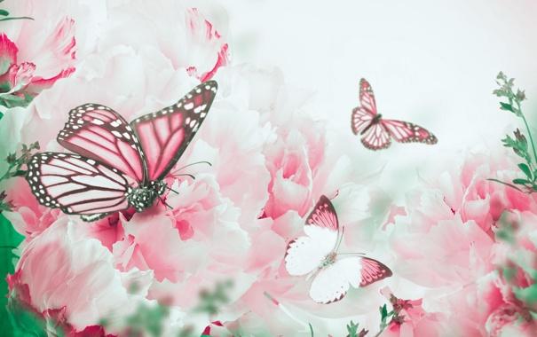 Фото обои бабочки, цветы, ветки, лепестки, цветение, butterfly, flowers