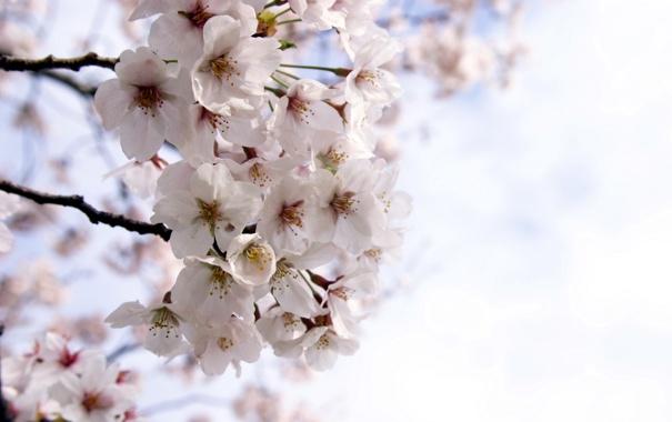 Фото обои природа, весна, сад