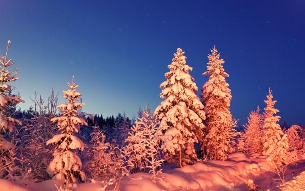 Фото обои зима, лес, снег, вечер