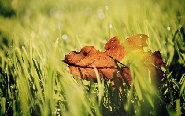 Фото обои капли, трава, роса, green, зелень, боке, цвета
