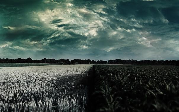 Фото обои поле, небо, цвета, природа, растения, горизонт