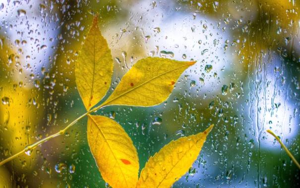 обои на рабочий стол осень листья дождь 15949