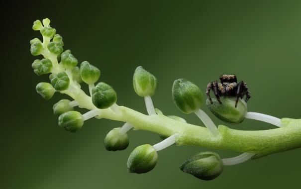 Фото обои зеленый, green, стебли, паук, spider, бутоны, buds