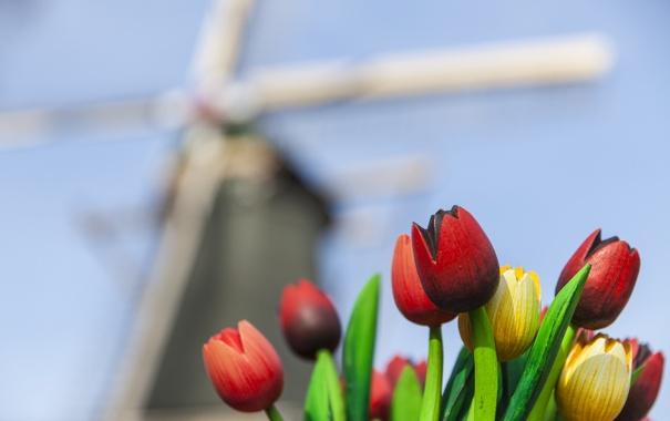 Фото обои тюльпаны, мельница, красные, букет, желтые, деревянные, фокус