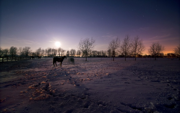 Фото обои зима, поле, ночь, кони