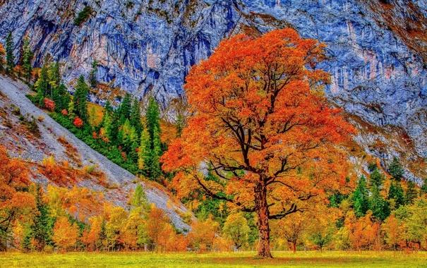 Фото обои трава, деревья, листва, гора, Осень